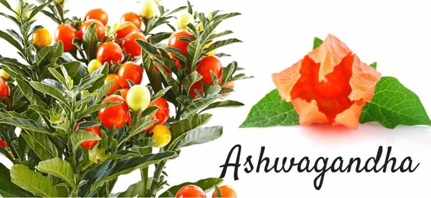 La Ashwagandha