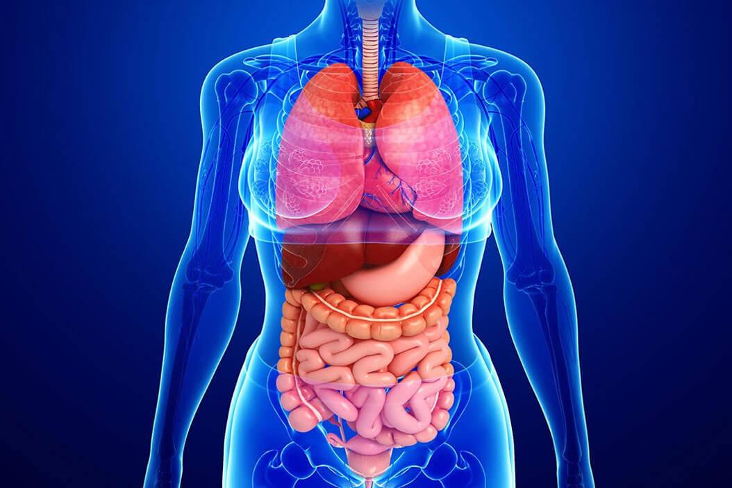 Las alteraciones del sistema gastrointestinal