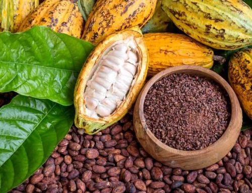 Alimentos estimulantes ¿para qué sirven?
