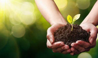 Tendencia por lo ecológico