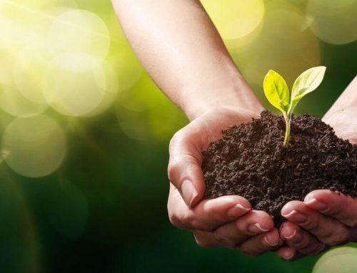 Productos ecológicos ¿Son mejores?