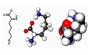 Molecula de aminoácido Tirosina