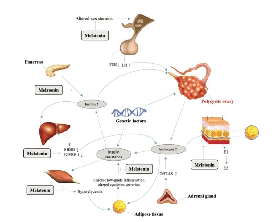 Efectos globales de la melatonina