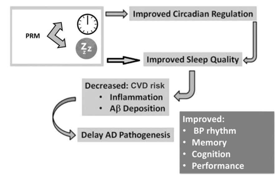Efectos propuestos de la melatonina sobre los mecanismos que relacionan los relojes circadianos