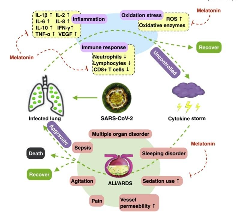 Potenciales beneficios de la suplementación de melatonina en SARS-CoV-2