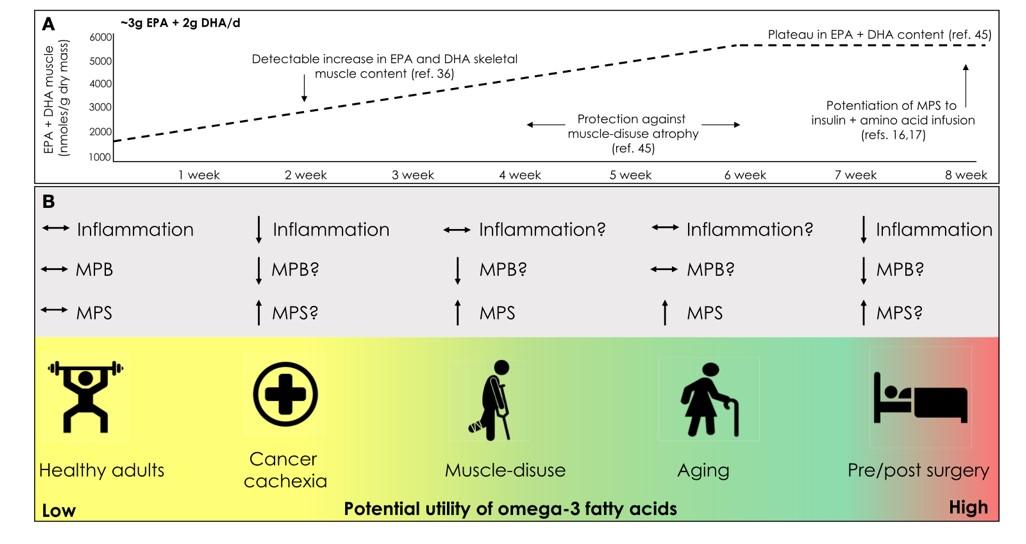 Cambio en el contenido de lípidos del músculo esquelético a través del tiempo con suplementos de ácidos grasos omega-3