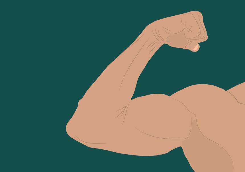 Mantiene el musculo