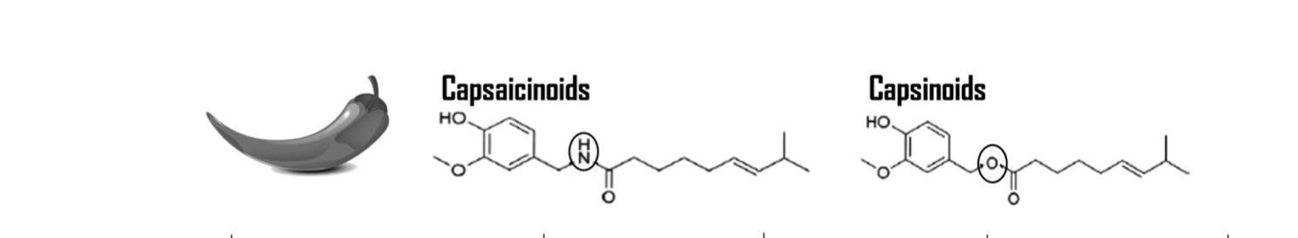 Capsaicinoides (pimiento picante) Vs Capsinoides (pimiento dulce)