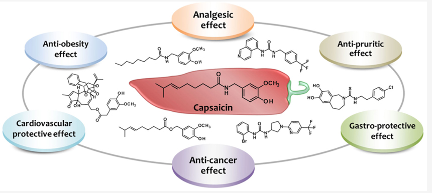 Efectos de la capsaicina a nivel clínico