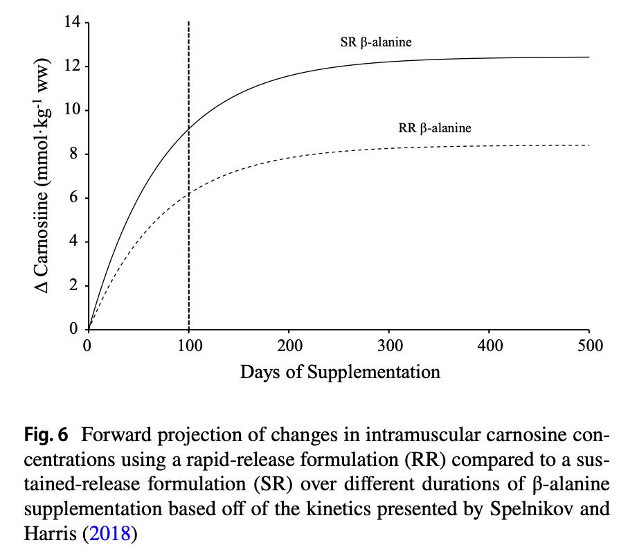 Fig. 6. Cambios a nivel intramuscular de carnosina entre formulas de liberación rápida (RR) y formulas de liberación lenta (SR)