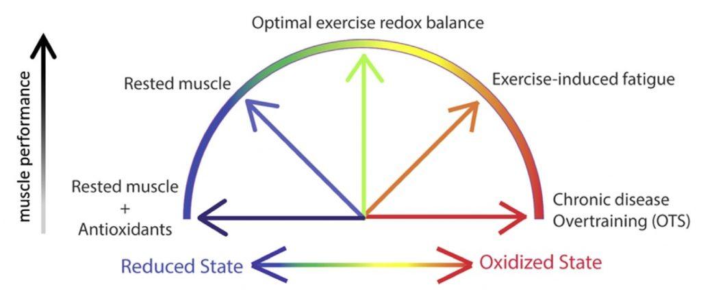 Fig 2. Rendimiento deportivo según el balance redox (homeostasis), excesivo estrés oxidativo puede producir fatiga inducida por el ejercicio y síndrome por sobreentrenamiento.